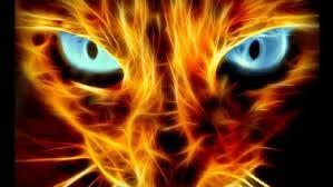 Cat of api, kebakaran