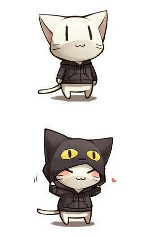 고양이 wearing a hoodie