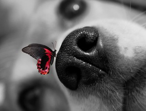 Dog and Butterfly