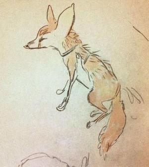 Fennec لومڑی sketch (shiyoon kim)