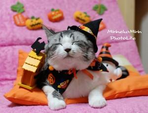 Halloween Katzen