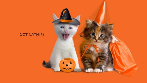 Cats wallpaper with a kitten, a cat, and a tom entitled HAPPY HALLOWEEN CUTE CATS