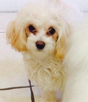 Lili my dog