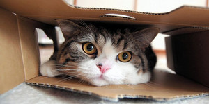 MARU CHAN CATS