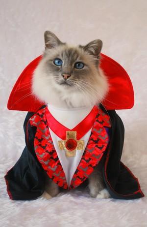 MR. Halloween Katzen