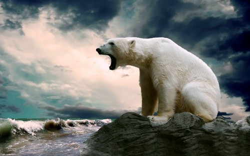 Animals wallpaper containing an ice bear called Polar Bear