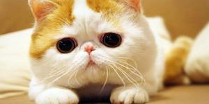 스누피 고양이