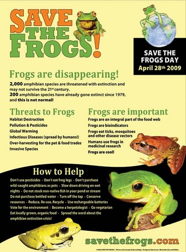 Keep Earth Green wallpaper called Save the Frogs