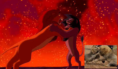 the lion king wallpaper titled Simba fights Scar