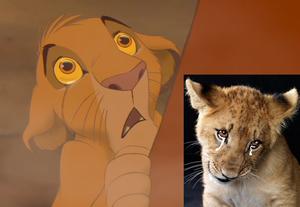 Simba's teary eyes :(