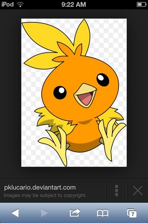 Torchic is cute