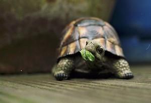 터틀, 거북