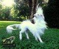 Unicorn       - fantasy photo