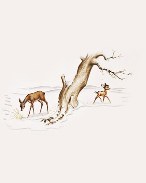 Walt ディズニー Production Cels - Bambi's Mother & Bambi