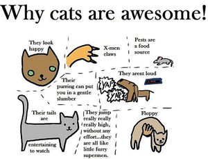Why Kucing Are Awesome!