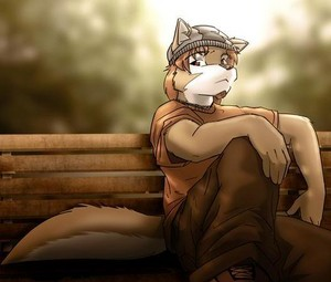 serigala on a banch