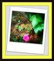 garden card - sam-sparro photo