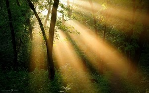 nature landscapes widewallpaper sunbeam 6669