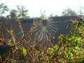 spiderweb in the garden