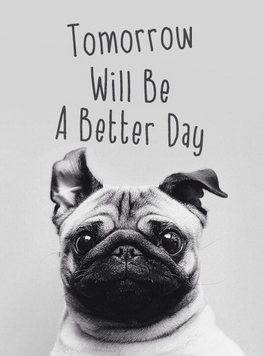 Quotes wallpaper probably with a pug called         Better Day