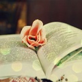 ★ Bücher ★