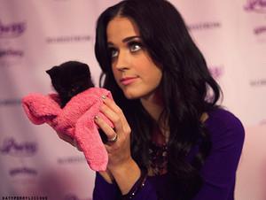 ╰❁ Katy ❁╮