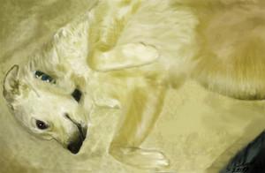 A Female Dog...