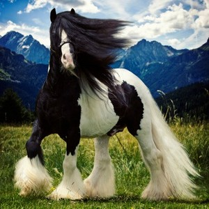 Beautiful clydesdale, کلیدسدہلی