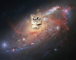 Cat In Space.