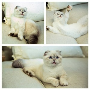 OLIVIA BENSON rápido, swift gatos
