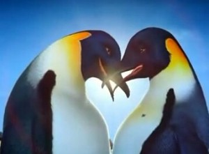 Penguins In Love.