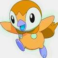 Piplup new shiny - pokemon photo