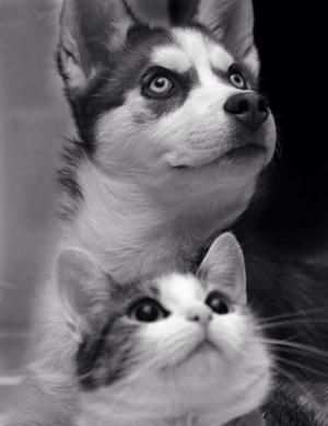 کتے and Cat