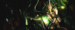 Soraka      - league-of-legends icon