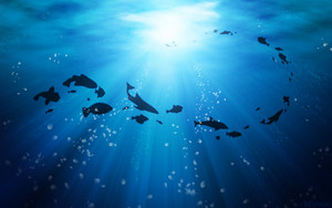 Swimming Fish Wallpaper