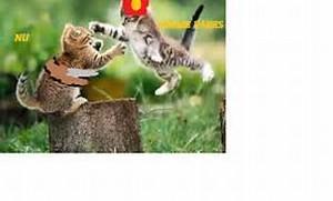kittys fighting