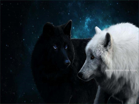 White And Black Wolves Together