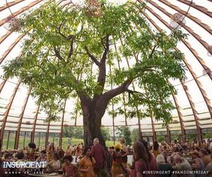 Amity albero