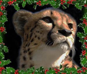 A Cheetah 크리스마스