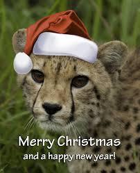 A Cheetah 圣诞节