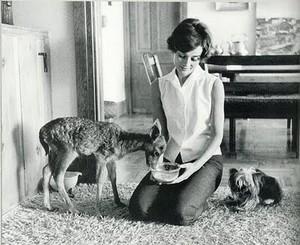 Audrey Hepburn and her pet deer Pippin