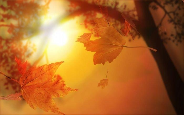 Autumn प्रशंसक Art