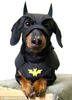 Batman's Awesome Sidekick