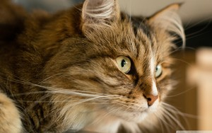 ネコ <3