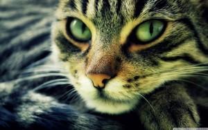 Kucing <3