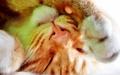 cats - Cats      <3 wallpaper