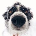 Dog               - dogs fan art