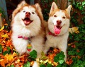 Dogs                - dogs photo
