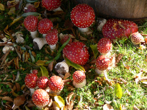 Magic mushrooms discovered in reyna Elizabeth's garden