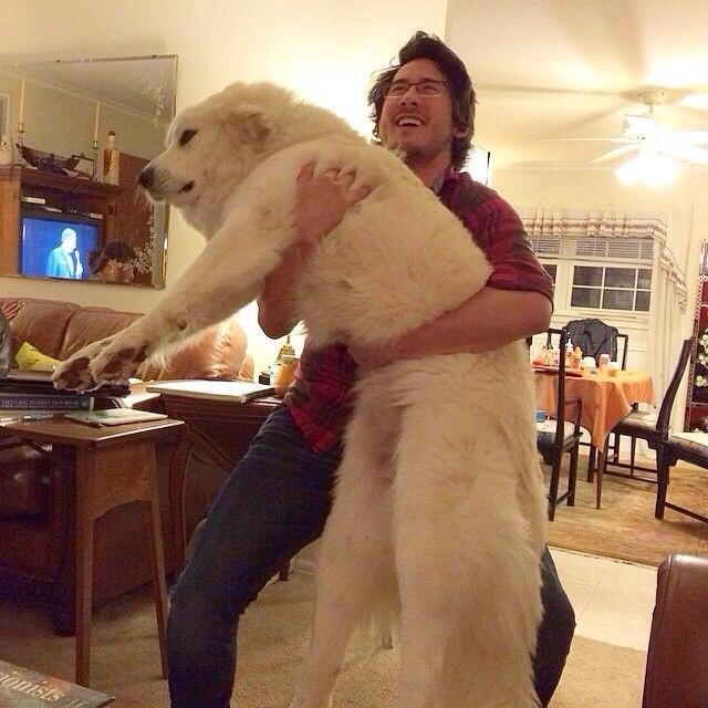 Markiplier S Dog Lucy
